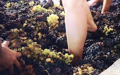 Vino natural Natural wine